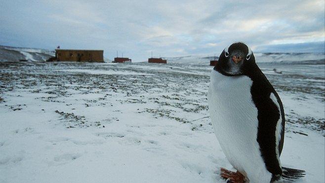 Cestujeme s National Geographic: Na Antarktidu s předními polárníky