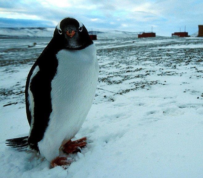 SPECIÁL: Antarktický projekt