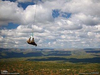 Nosorožec pod vrtulníkem
