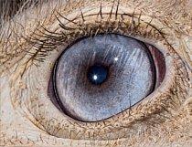 12. Čí jsou to oči? a) pštros dvouprstý b) slepice domácí c) velryba grónská