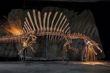 Pracovníci muzea dokončují anatomicky přesný model kostry dinosaura druhu Spinosaurus aegypticus.