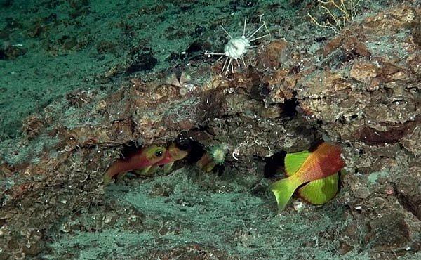 Dejte jméno rybce a vyhrajete expedici na Galapágy