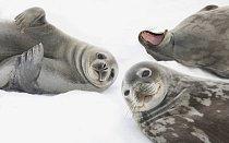 Na Antarktidě najdeme mnoho obratlovců (kytovci, tuleni, rypouši, některé ryby a další) a mnoho ptáků.