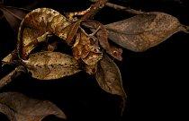 V deštném pralese se zvířata skvěle maskují, ať už jde o nenápadné housenky, nebo pestrobarevné motýly.