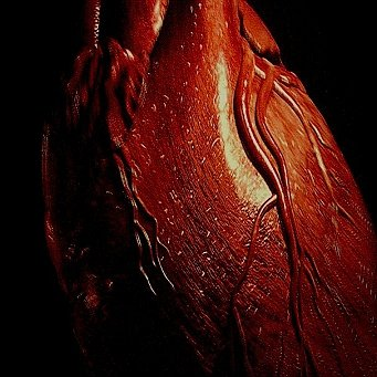 Pilulky opraví srdce