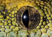 13. Čí jsou to oči? a) krajta zelená  b) zmije obecná c) tygr čínský