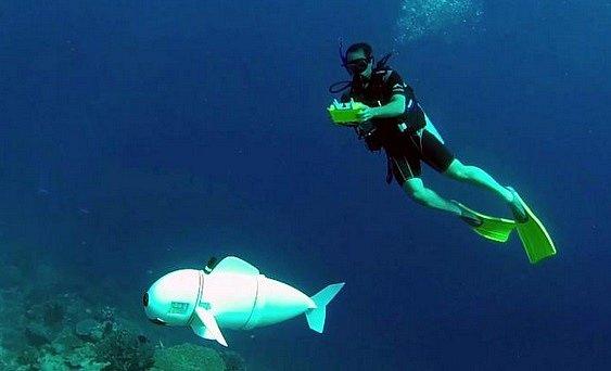 SoFi už prozkoumala pobřežní vody jižního Pacifiku nedaleko Taveuni, třetího největšího ostrova Fidži.
