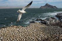 Na ostrově Mercury poblíž Diamantového pobřeží vNamibii žijí racci, terejové a tučňáci jako sousedé. První namibijská CHMO usiluje o omezení lidského rušivého vlivu a podporuje přírodní rozmanitost kolem ostrova Mercury a deseti dalších ostrovů.