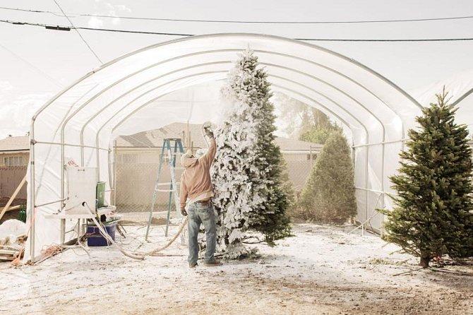 """Zaměstnanec prodejce vánočních stromů Pacific Furs Tree Lot vroce 2011 """"vločkuje"""" strom vGlendale vArizoně. Vločkování je proces postřiku stromu bílou přilnavou směsí, která připomíná čerstvý sněhový poprašek."""