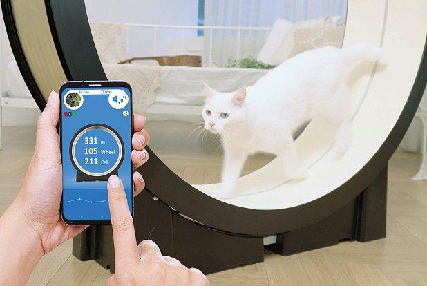 Chytrý běžecký trenažér láká k pohybu kočky s nadváhou