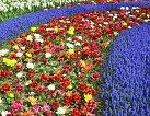 Vědci objevili gen, který kastruje rostliny, brání tvorbě pylu