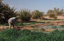 Vody je tu málo, a tak se musí využít na sto procent a přelívat z pole na pole.