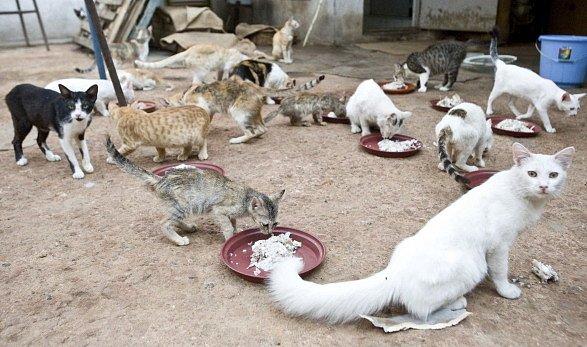 Kočičí útulek v Indii