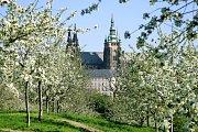 Pokud bydlíte v Praze nebo zde budete od 26. do 29. dubna, máte možnost se díky zúčastnit výzvy City Nature Challenge.