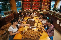 """Ženy třídí, čistí a svazují """"houbové larvy"""" v Síni housenic Čung-š´ v Čcheng-tu. Za 1 500 červů nejvyšší kvality – to je zhruba kilogram – může firma získat až 100 000 dolarů."""