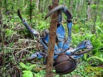 Krab palmový patří k největším krabům na světě.