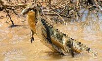 V jihovýchodní Asii je zmije řetízková známá jako zabiják.