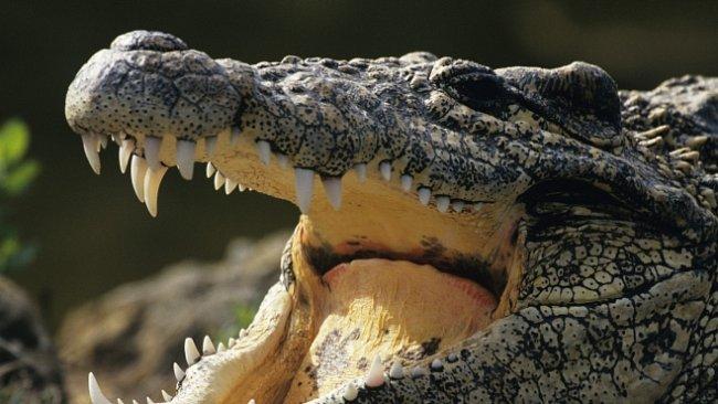 Nejhorší lidožrouti v dějinách: Obří krokodýl Gustav zabil stovky lidí