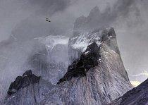 Na vítězném záběru v kategorii ptáci v životním prostředí pátrá kondor andský (Vultur gryphus) po kořisti v chilském národním parku Torres del Paine.