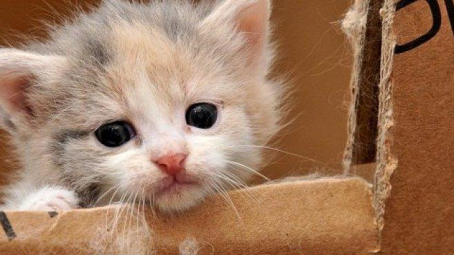 Sledování roztomilých zvířat zvyšuje pracovní výkon. Může za to evoluce