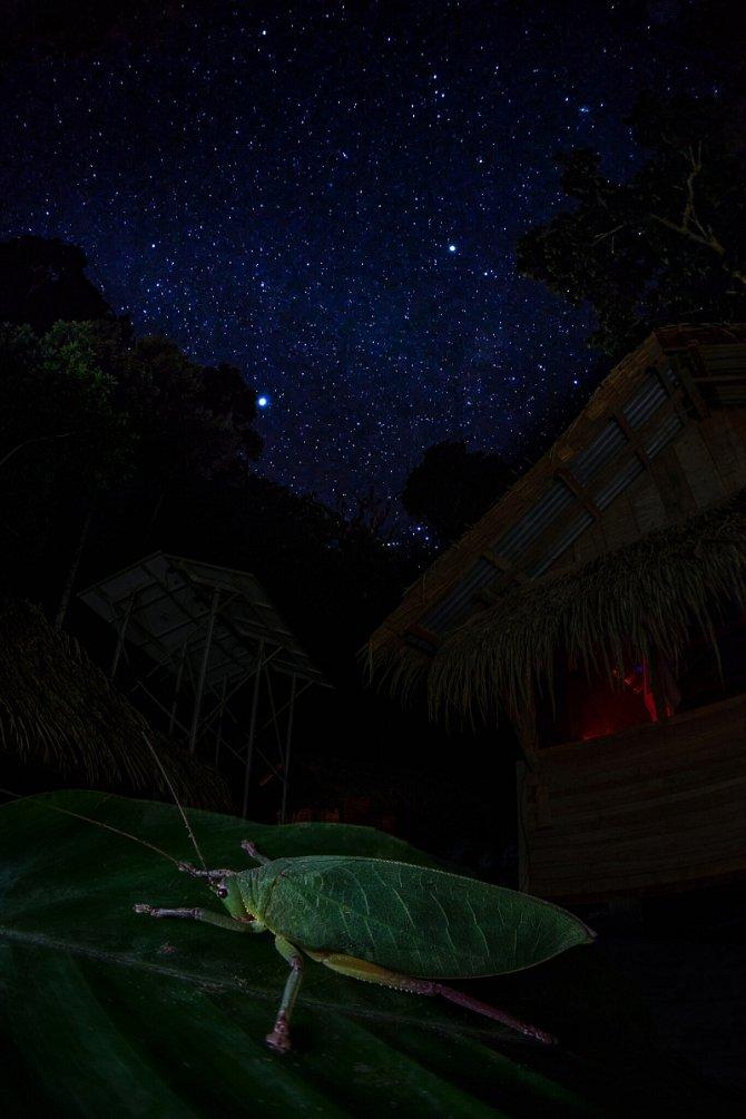 Noční kobylka