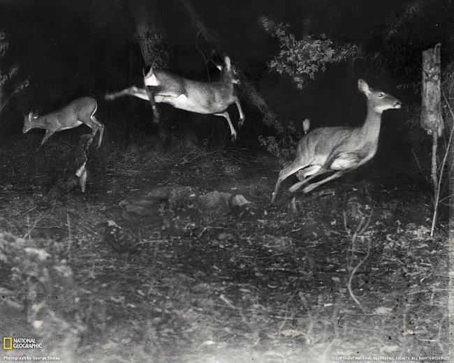 První obrázky divoké přírody v časopise NG