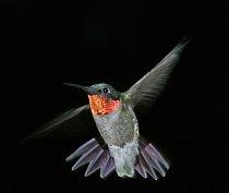 Létající drahokamy
