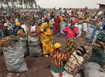 Dřevění uhlí se na trhu u města Goma prodává za cenu 17 dolarů za pytel. Pochází přímo z pralesa. Protože téměř žádná domácnost nemá elektřinu, jsou rodiny odkázány při vaření i ohřevu vody jen na dře