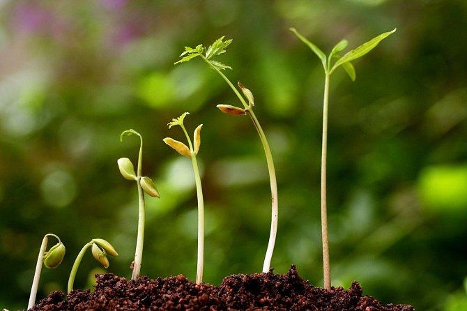 I bez nervového systému si rostliny vytvořili vlastní systém ochrany.