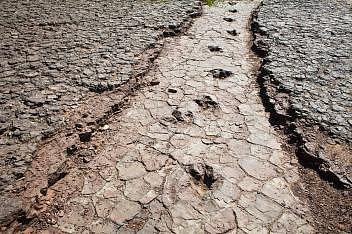 Řada dinosauřích stop protíná Údolí dinosaurů voblasti Sousa vBrazílii.