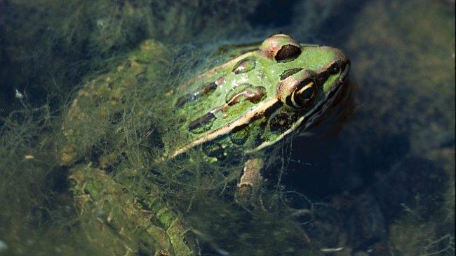 NEJ videa National Geographic: Žabák zvrací potomky. Předtím jim ale poskytl tu nejlepší péči