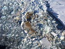 Spodní plocha ledu je pokrytá ledovými řasami – většinou rozsivkami, které tvoří základ potravního řetězce polárních moří.