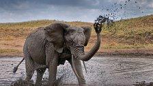 Cestujeme s National Geographic: V africké divočině, s profesionálními fotografy, lvy a slony