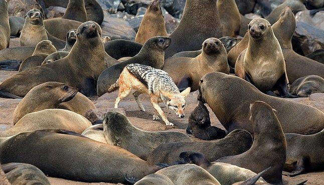 Dobrodružství v jihoafrické přírodě