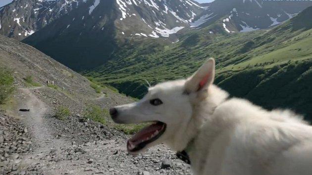 Husky Nanook