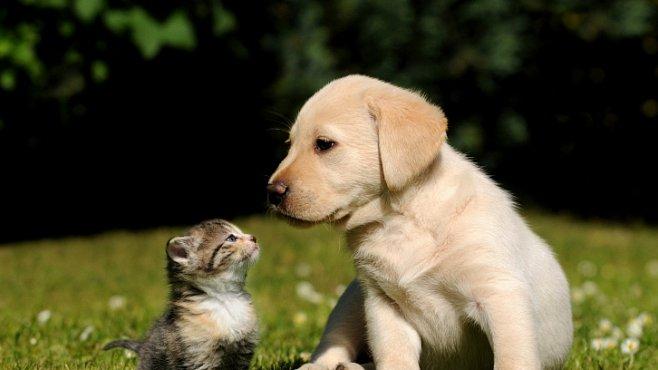Psí a kočičí lidé, dva úplně odlišné druhy