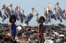 Populace marabu rapidně klesá, protože jejich přirozené prostředí mizí.