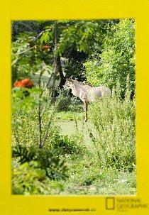10. místo: Antilopa koňská (Pavla Šafránková)