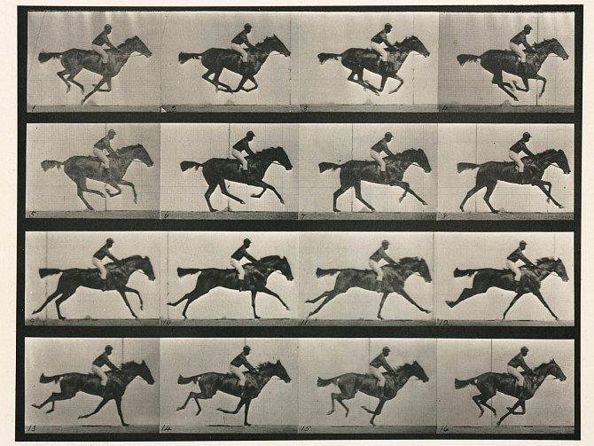 Fotografická studie běžícího koně