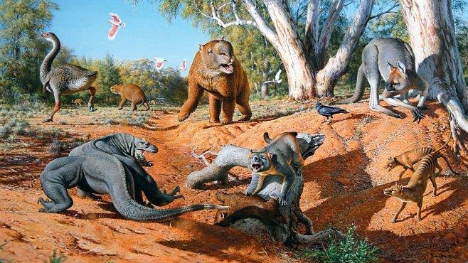 Obří klokani, monstrózní ještěrky i půltunové husy – to byla australská megafauna