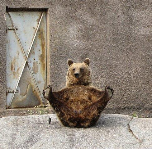 Medvědí rozcvička