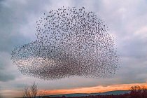 Anglické hrabství Dorset nemohlo dostat od ptáků jasnější zprávu.