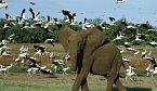 Jak vymírají jazyky, tak  mizí i živočišné druhy. Kde je souvislost?