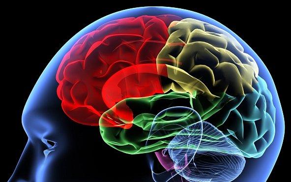 Velký mozek neznamená velkou inteligenci, dokazují biologové