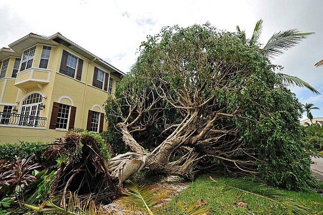 Hurikán, který dosahoval rychlosti až 210 kilometrů, neminul ani město Naples, kde vyvracel silné stromy.