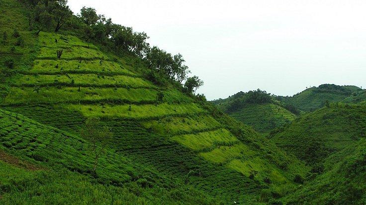Krajina Bwindi v okolí vesnice, nejvyšší kopce dosahují 1 800 m.