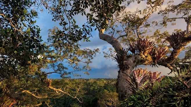 Deštný prales na prodej. Kvůli stamilionům nevytěžených barelů ropy. EXKLUZIVNĚ PRO NG