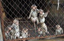 Čína ovládá trh s pokusnými zvířaty