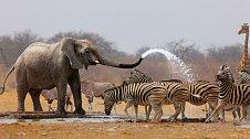 U vodních zdrojů jsou v Africe vždycky souboje o vodu.