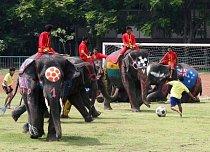 Sloni během Elephant World Cupu v Thajsku.